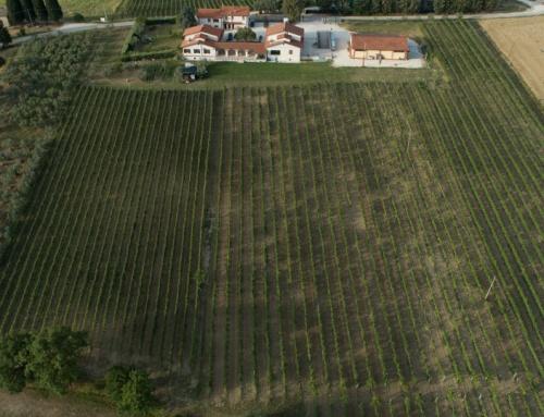Cantine Aperte in Umbria: l'appuntamento imperdibile di fine maggio