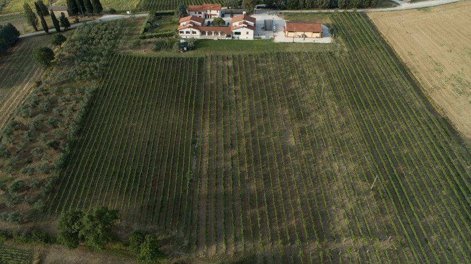 Aerial view Cantina Dionigi